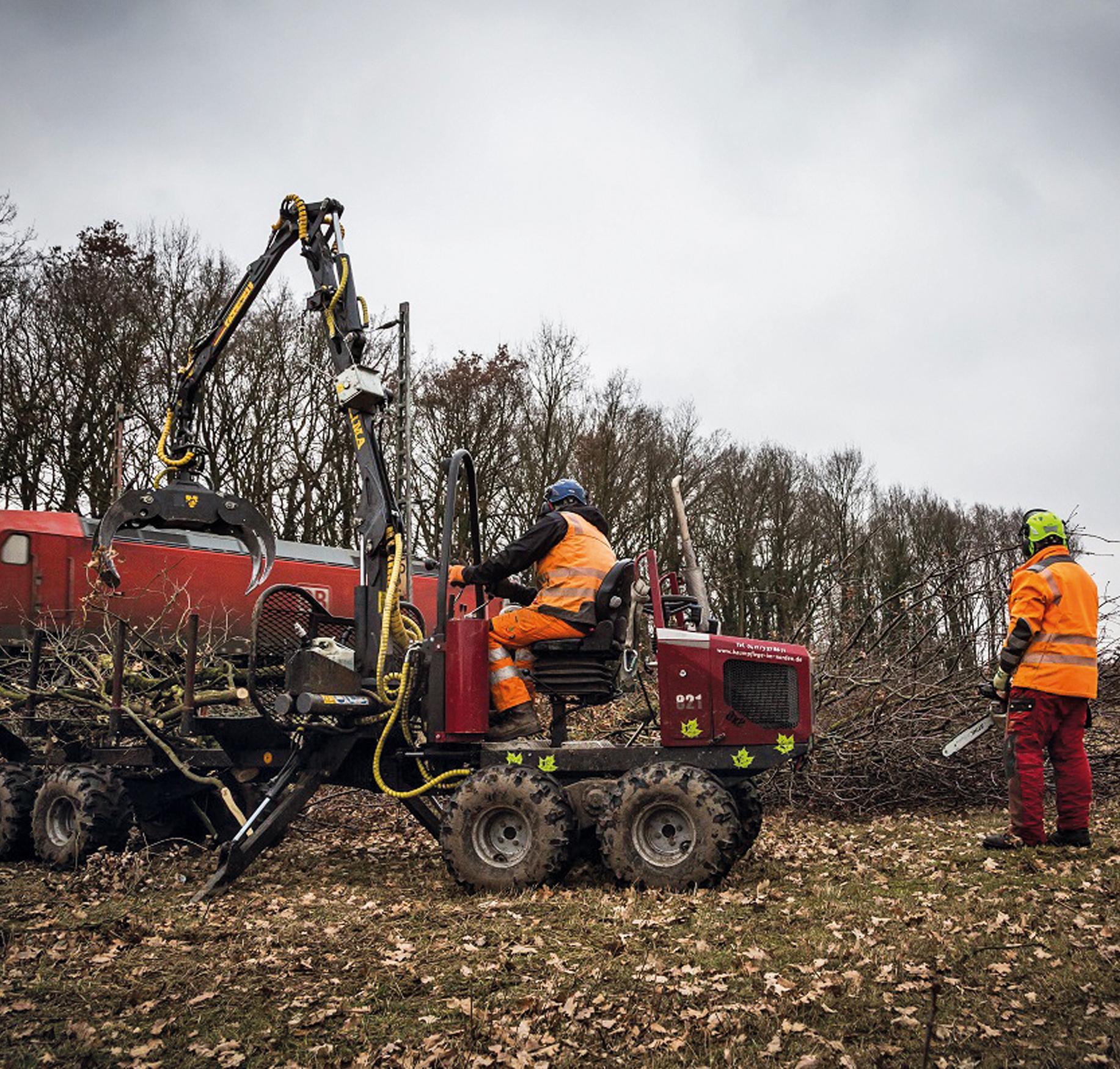 vegetationsmanagement bei der bahn: arbeiter beim zerlegen von gefällten bäumen